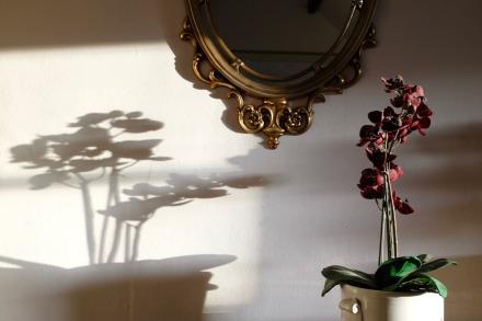shundo orchid